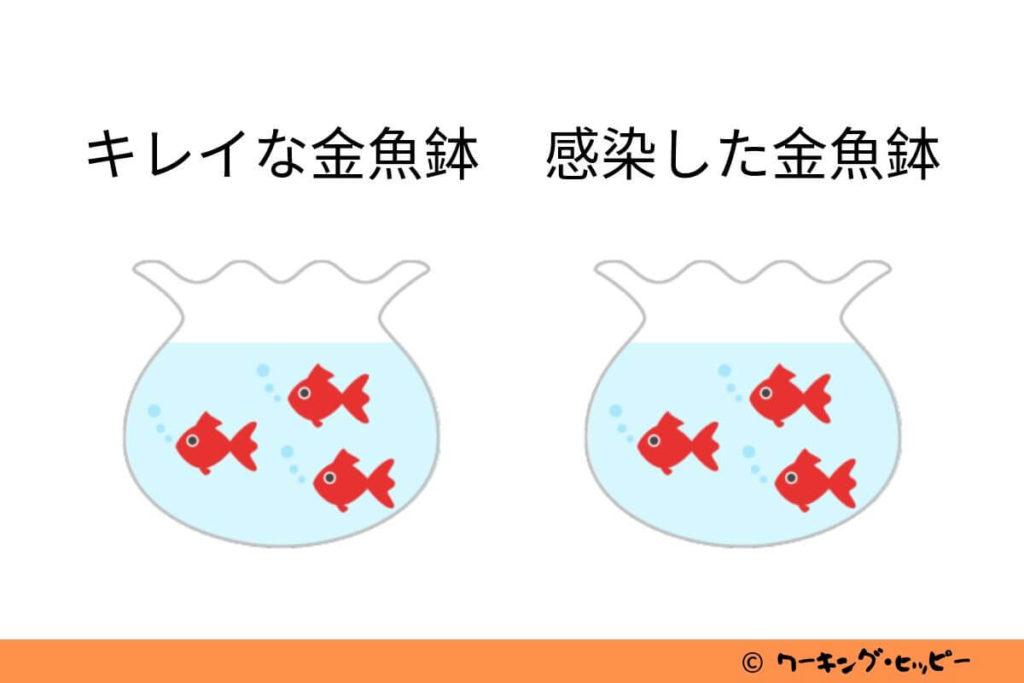 金魚鉢理論